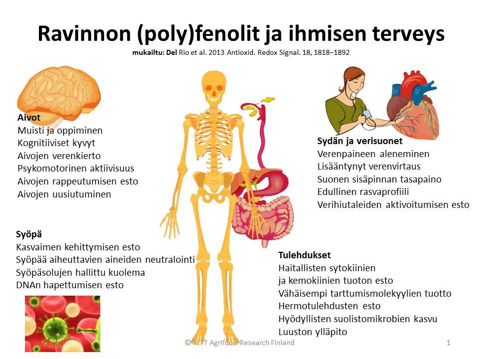 Ravinnon-polyfenolit-ja-ihmisen-terveys.jpg