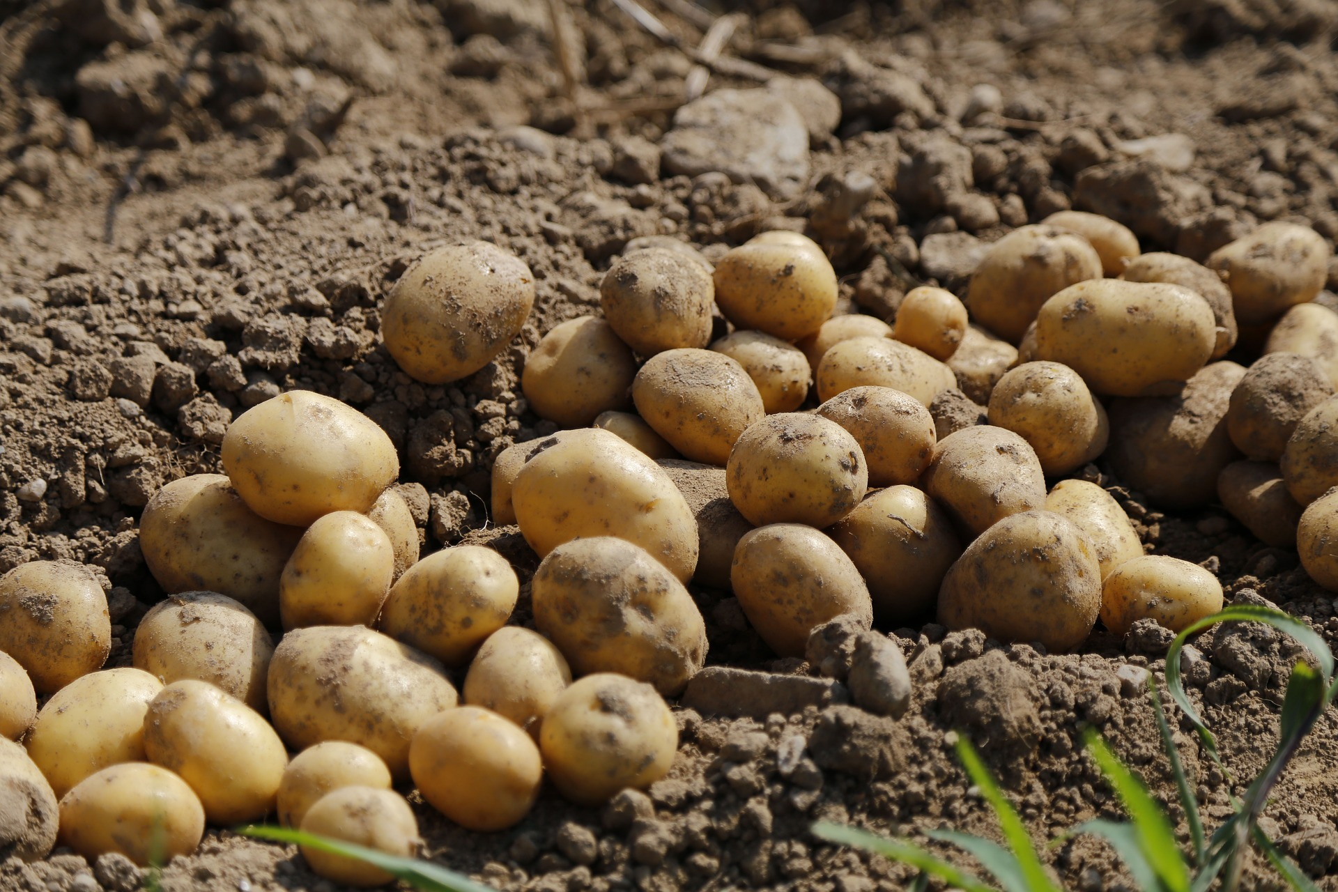 potato-983788_1920-pixabay.jpg