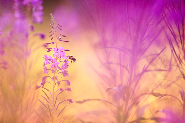 mehilainenhorsmassa-vastavalo-708521-e1611568889990.jpg